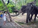 Namuang Jungle Elephant Trip 32