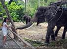 Namuang Jungle Elephant Trip 33