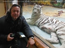 Kinderstube der weißen Tiger Drillinge 16