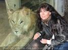 Afrikanische Löwen 10