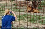 Mit den Löwen 06
