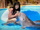 Dolphin Show 24