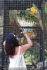 Parrots Park 25