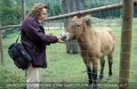 Mit Przewalski Pferd