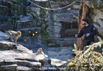 Affen Fütterung