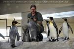Bei der Pinguin Fütterung