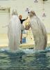 Beluga Whale Show 02