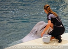 Beluga Whale Show 13