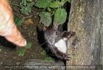 Eichhörnchen Begrüßung