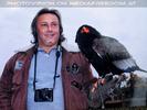 Greifvogelflugschau 40