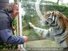 Hy Tiger