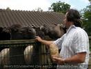 Pferde Fütterung