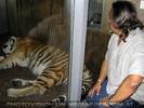 Tiger Wächter
