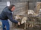 Advent Stimmung 18 - Lamperl füttern
