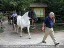Pferde zurück in den Stall