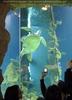 Puppy die Wasserschildkröte im Photo