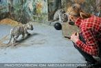 Kinderstube der weißen Tiger Drillinge 18