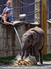 Die Elefanten Dusche 01