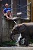 Die Elefanten Dusche 03