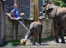 Die Elefanten Dusche 05