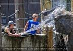 Die Elefanten Dusche 07