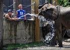 Die Elefanten Dusche 08
