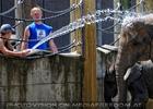 Die Elefanten Dusche 09
