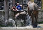 Die Elefanten Dusche 15
