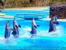 Dolphin Show 04