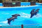 Dolphin Show 05
