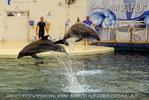 Dolphin Show 11