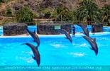 Dolphin Show 16