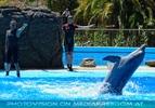 Dolphin Show 18