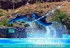 Dolphin Show 21