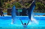 Dolphin Show 23