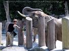 Elefanten Familie 9