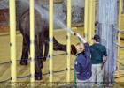 Elefanten Pflege 04