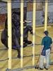 Elefanten Pflege 06
