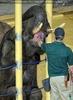 Elefanten Pflege 07