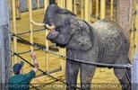 Elefanten Pflege 12