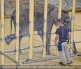 Elefanten Pflege