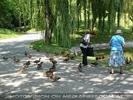 Enten füttern im Kurpark