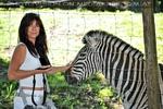 Bei den Zebras 1