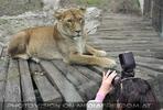 Löwen 12