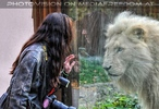 Löwen 15