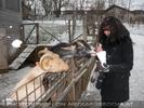 Advent Stimmung 23 - Ziegen füttern