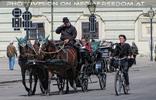 Fiaker und Radfahrerin