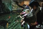 Fische streicheln erlaubt