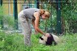 Großer kleiner Panda 3