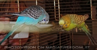 Birdland 31